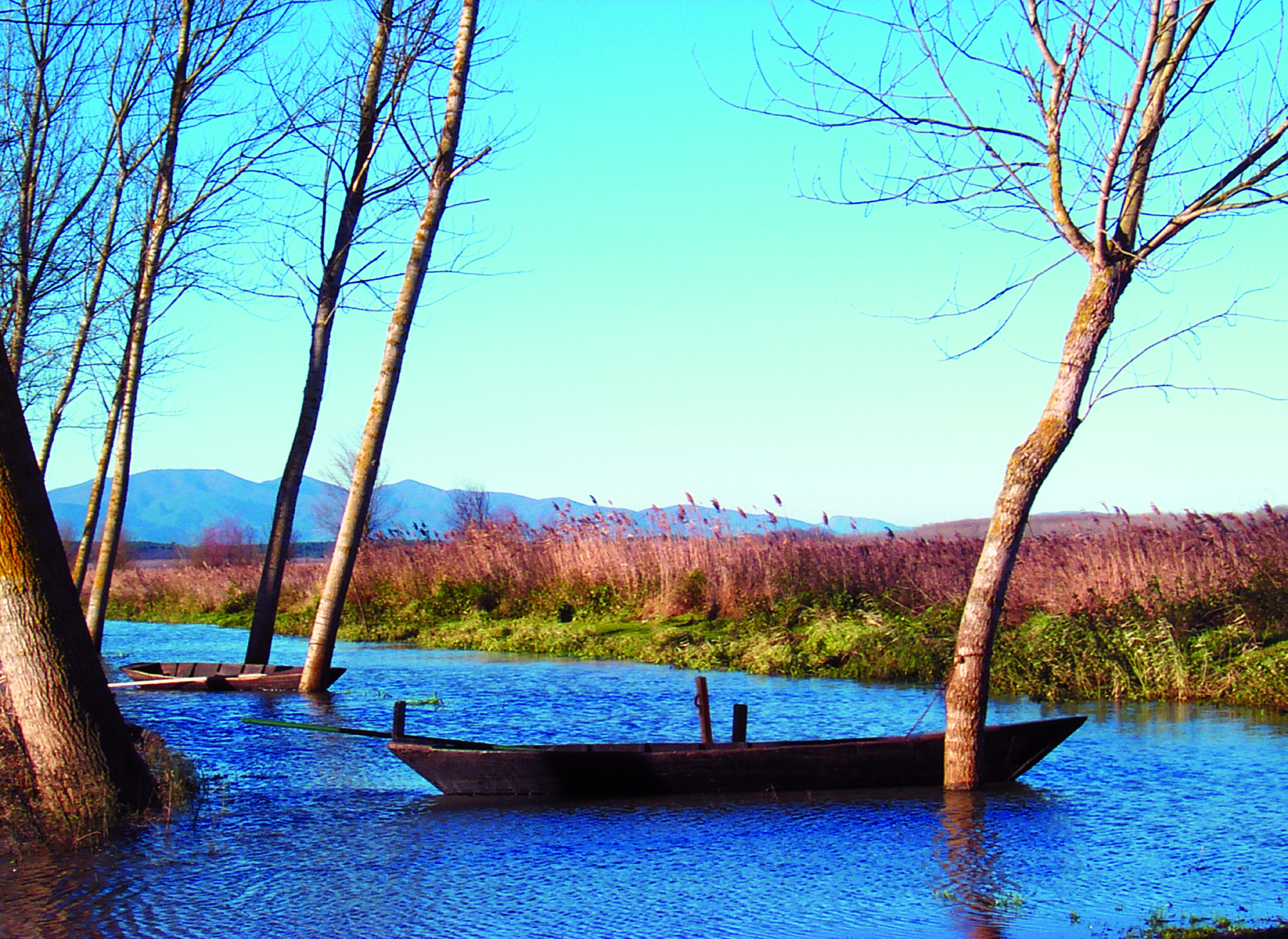 Marshes of Fucecchio