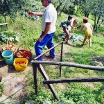 Farm Holidays La Baghera - La Baghera - Vegetable Garden