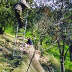 Farm Holidays La Baghera - La Baghera - Olives Picking